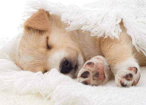 Young-Puppy-Sleeping.jpg
