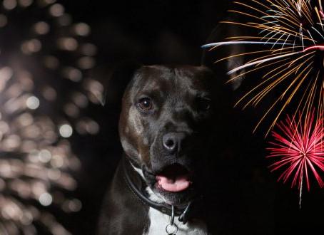 Fearful Fireworks