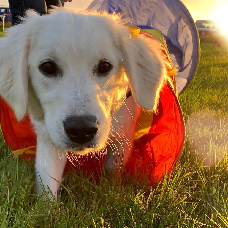 Puppy Programme Classes