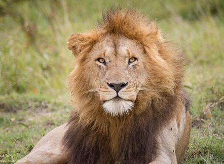 Stop Killing Lions Protest - London