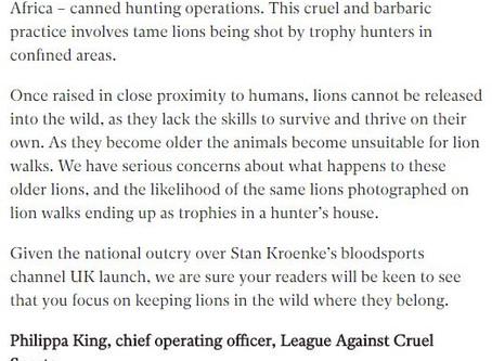 Irresponsible Lion Walking Article & Our Response