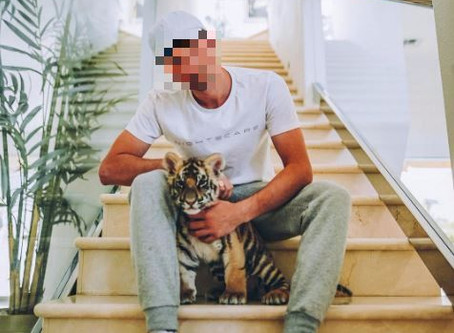 What's the difference between handling a lion cub in South Africa and a tiger cub in the US?