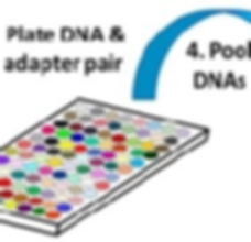 plate dna_cropped2.png