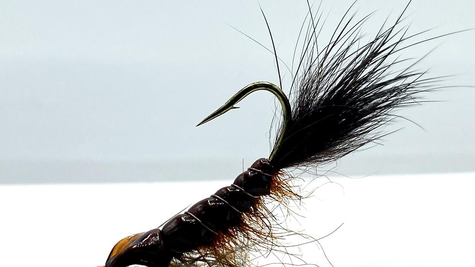 Barry's Carp Fly