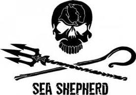 sea-shep.jpeg