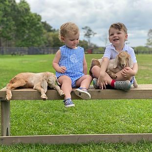 Kids with goats.jpg
