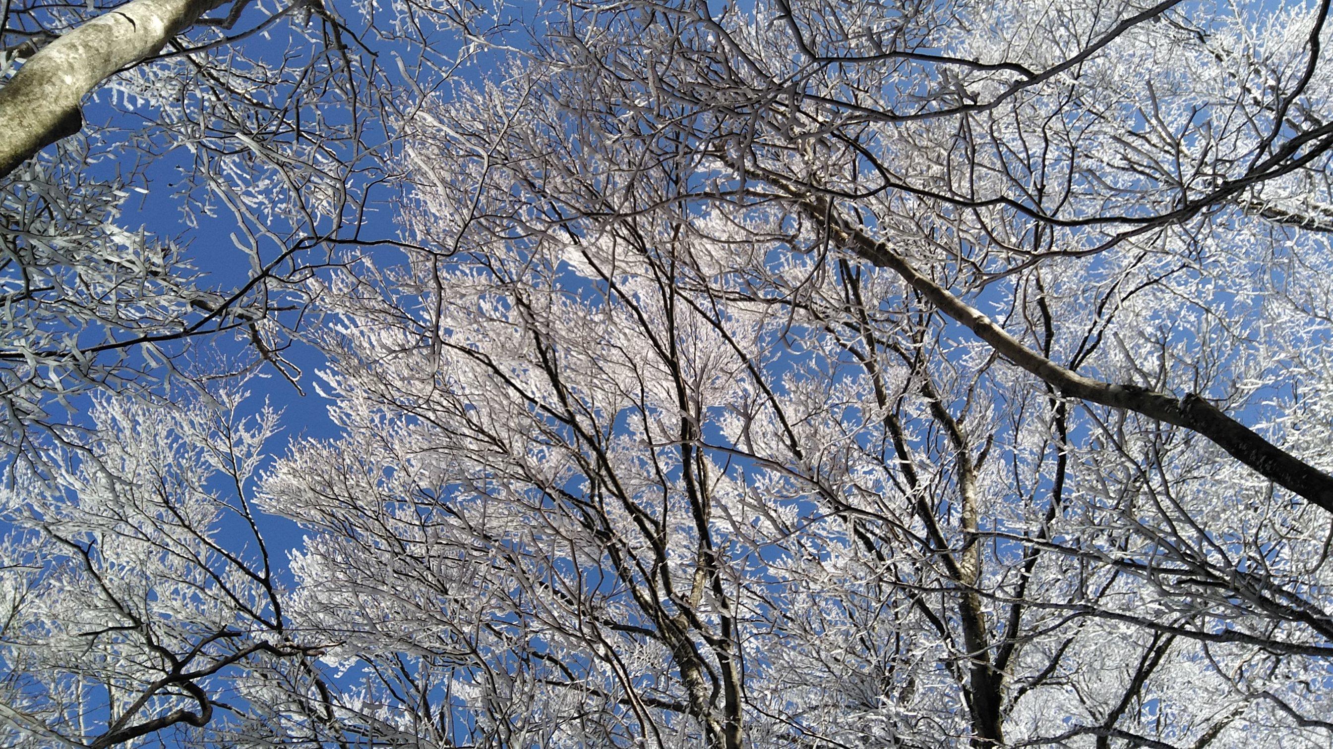 冬・霧氷の樹々
