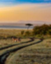 antelope-4121962_1920.jpg