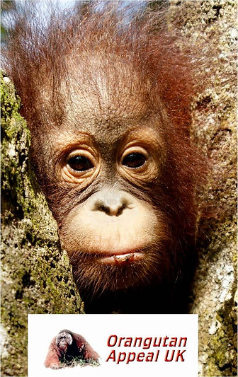 Indonesia monkey.jpg