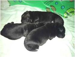 Mimi's Pups