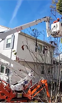 Tree pruning in action