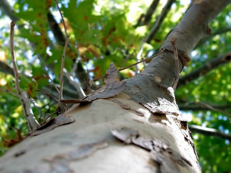 5 Reasons You Should Remove That Dead Tree