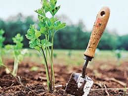 Mulching  & Fertilizing