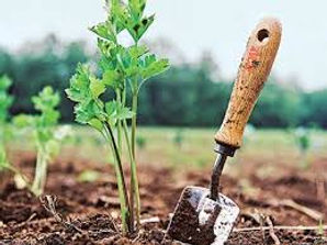 Tree and garden mulching and fertilizing