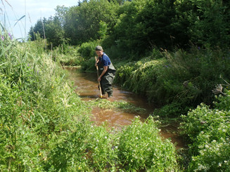 Watercress Control in Brook Trout Spawning Habitat