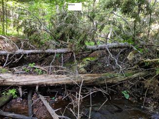 Cain's Brook Restoration