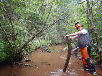 Rehabilitating Brook Trout Habitat on the Headwater Streams of the Hunter River