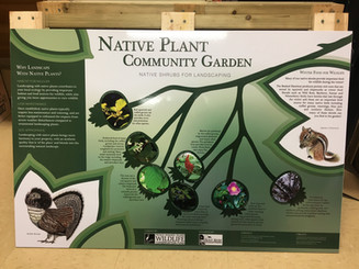 Stanley Watersheds Native Plant Diversity Project