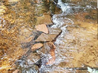 Determining Restoration Options for MacPherson's Mill (Pinette River)...