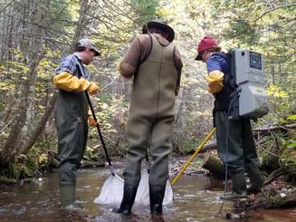 Factors Affecting Poor Salmon Survival in Northeastern PEI