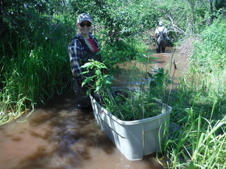 Southeast Environmental Association