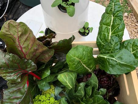 Fresh Produce at Purdon Groves