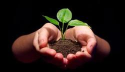 hand plant.jpg