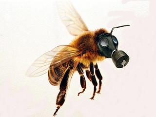 O novo vício das abelhas