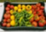 Greenhouse harvest.jpg