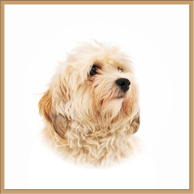 Hundeporträt edel