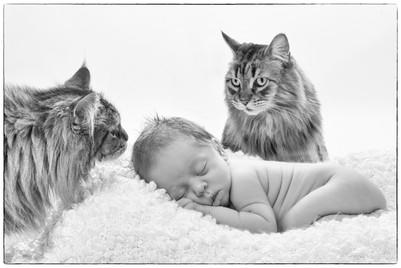 Babyfoto mit zwei Katzen