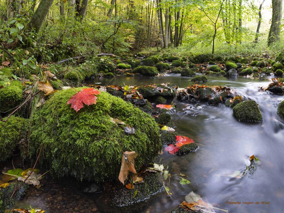 Der Winterbach in Burbach im Herbst
