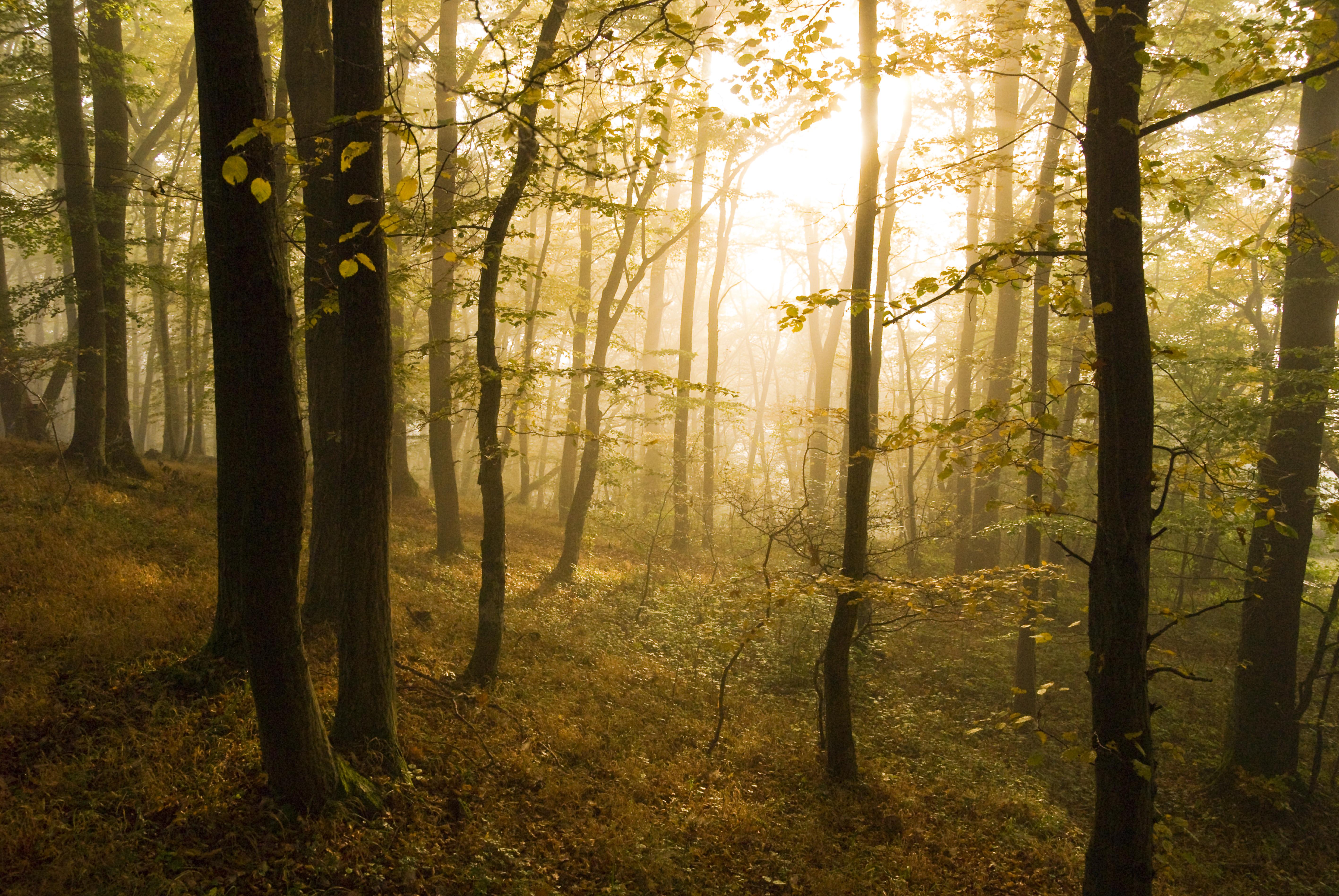 Märchenhaftes Licht im Laubwald