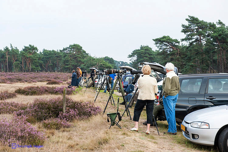 Hirschfotografie auf De Hohe Velue