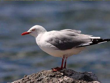 The Summer Seagull