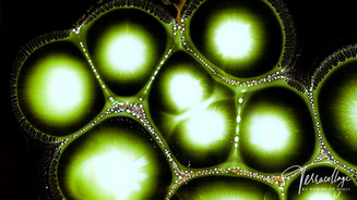 Terracollage 8K Radiolarians Ink Drops Inverted Image Universe Abstract Macro Experimental Fluid Art Colors Fluids Colorful Stock Footage by Roman De Giuli