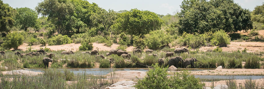 Elephants by the River.jpg