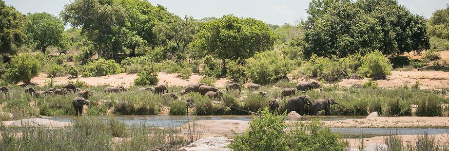 Elephants by the River.jpg