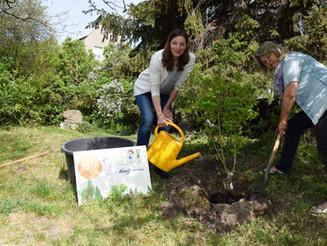 Anmeldestart erfolgt - Bäume und Sträucher gepflanzt