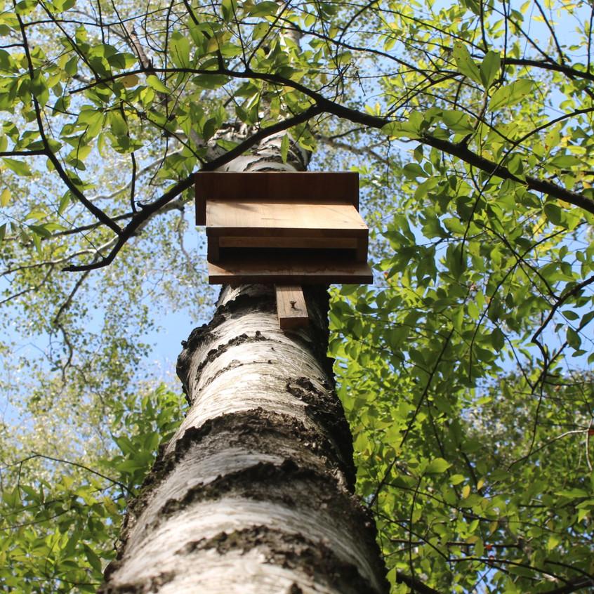 Natur zum Anfassen | Lausitzer Wege