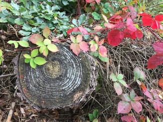 Der Herbst malt die Blätter an - 719 Einsendungen für den Kalenderwettbewerb