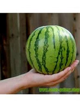 Mini Wassermelone
