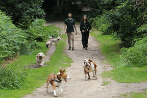 An interview with Green Dog Walking