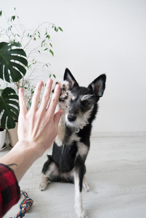 Indoor games and exercises to do with your dog when self-isolating