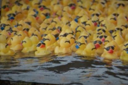 Ducks for the Duck Race