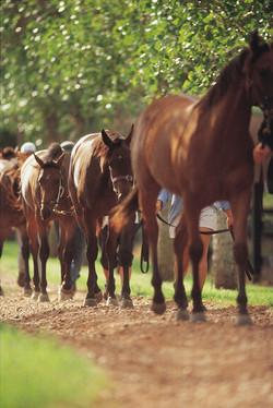Vinery - Stallions March.jpg