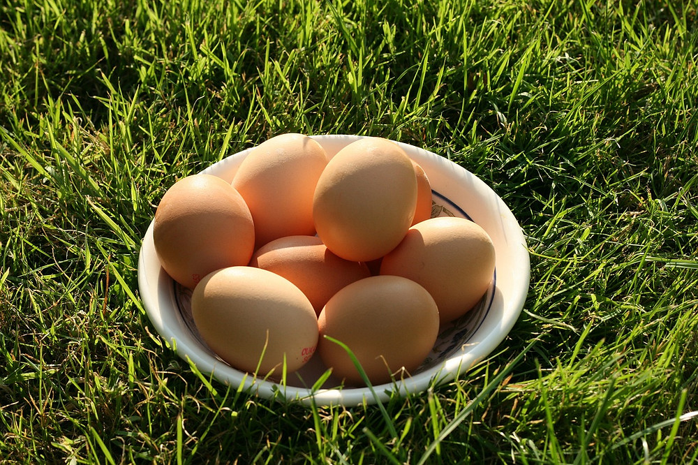 sustainable, carbon neutral eggs are possible