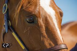 EYE equine Katrina Partridge (12).jpg