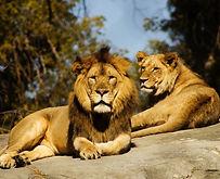 monarto zoo.jpg