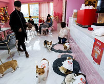 pet cafe.jpg
